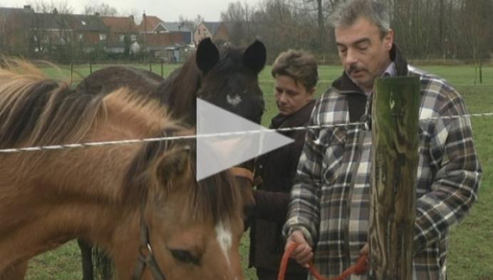 Nijlens koppel wil vuurwerk laten verbieden wegens dood paard