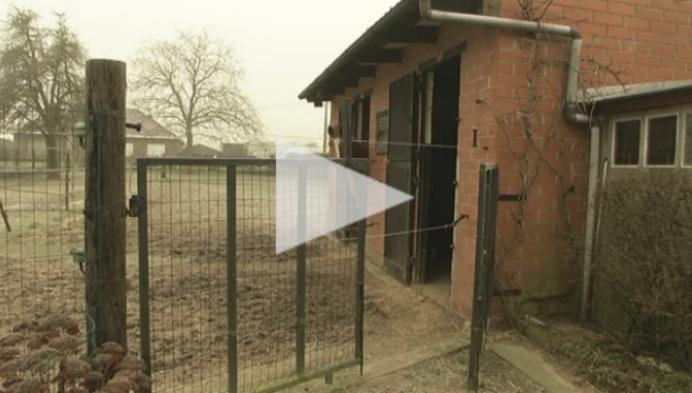 79-jarige paardenfokker houdt ermee op