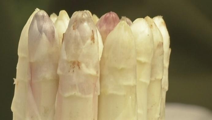 Eerste aspergesteek in bakermat Puurs