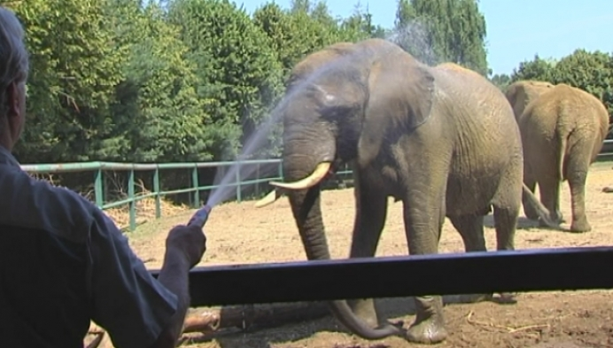 Ook de Olmense Zoo kreunt onder de hittegolf