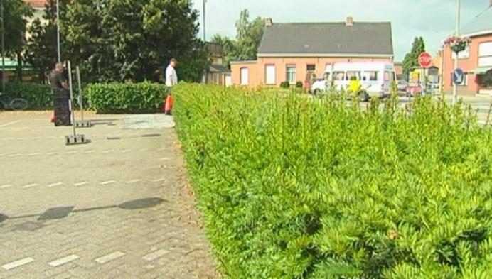 Politie waarschuwt voor malafide taxussnoeiers