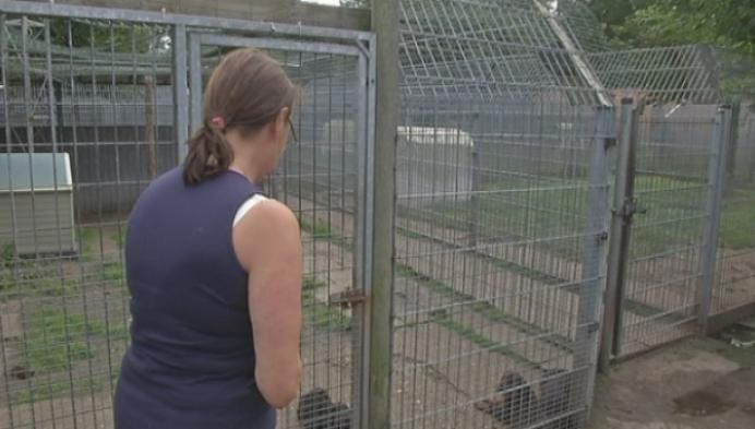 Douane onderschept illegaal transport van pups