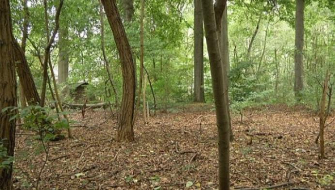 Knotes uit Bonheiden genomineerd voor mooiste boom van Vlaanderen