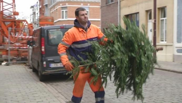 Duffel haalt steeds minder kerstbomen op