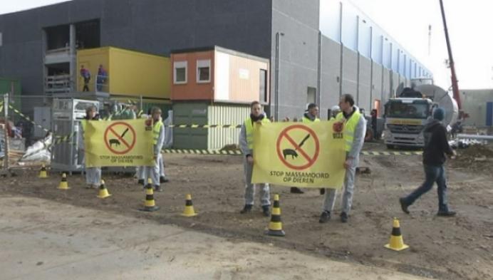 Dierenrechtenorganisatie voert actie werf slachthuis Oevel