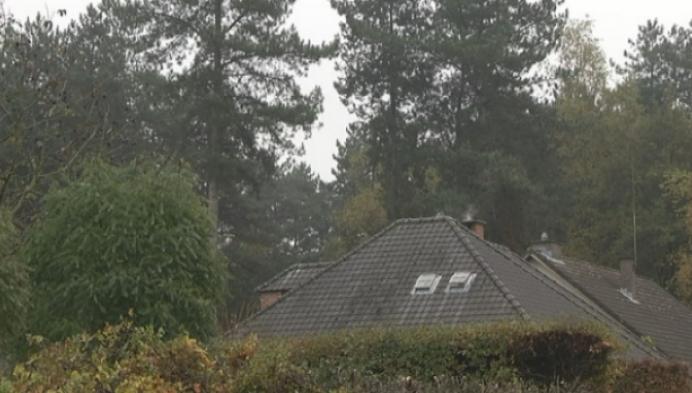 Bos verdwijnt voor sociale woningen