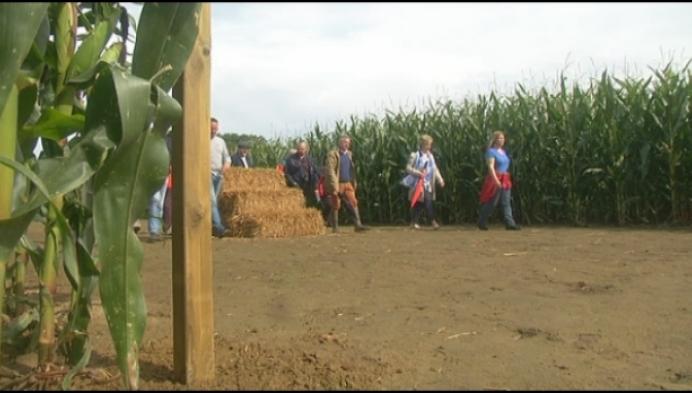 Maïsdoolhof laat je verdwalen in Heist-op-den-Berg