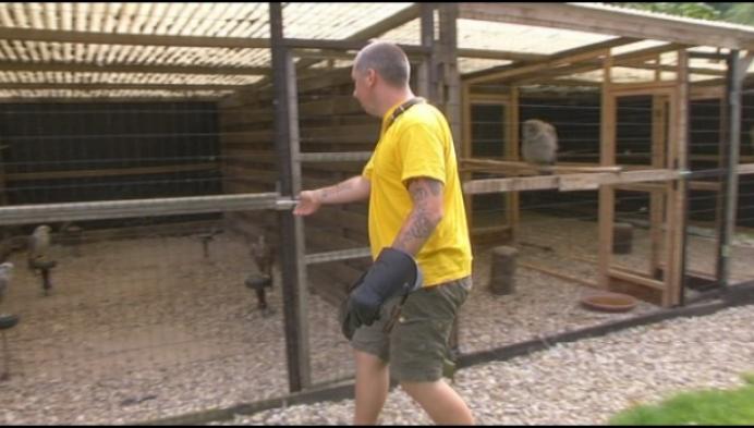 Valk verdwenen na roofvogelshow in Geel