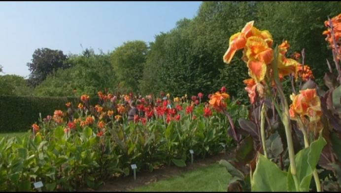 Voor 1 keer mag het: bloempjes plukken in het park