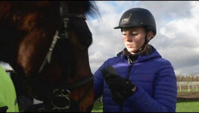 """""""Autobestuurders, let op voor paarden op de weg!"""""""