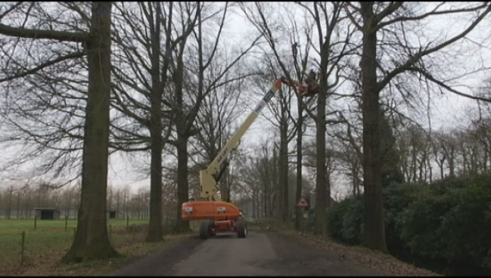 Monumentale bomen in Gestel krijgen snoeionderhoud