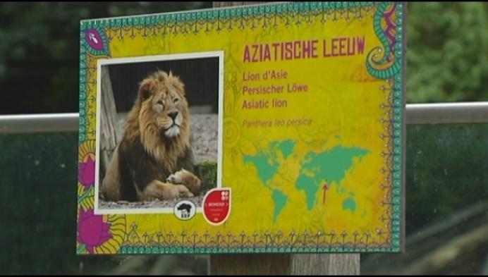 Leeuwin gedood om veiligheid van mensen te vrijwaren, zegt Planckendael