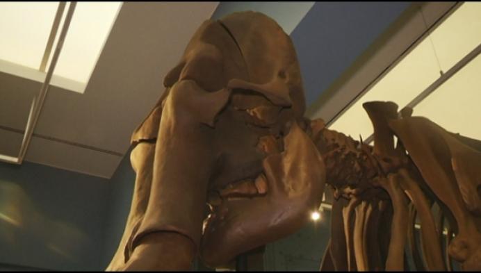 Skelet van 30.000 jaar oude mammoet in 3D geprint