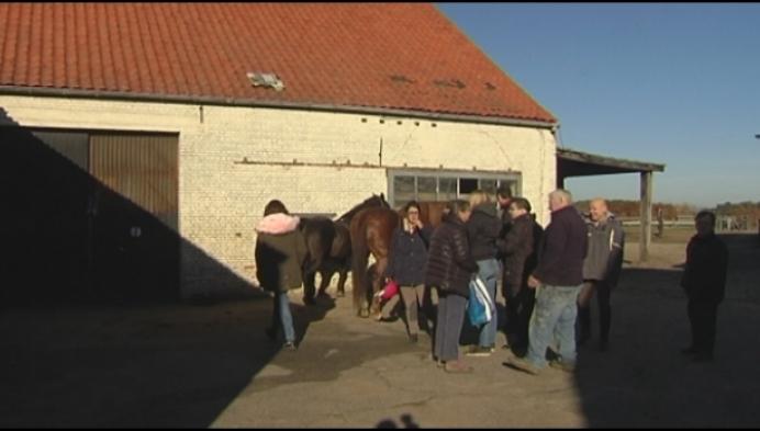 Fries paard gestolen uit stal in Geel-Zammel