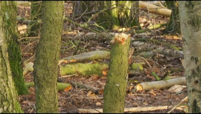 Jongeren vernielen bomen en laten afval achter in Pasbrugbos