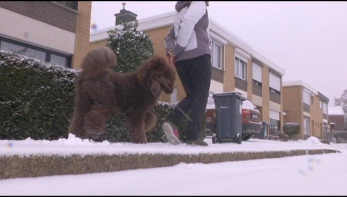 Hondentrimsalon in Herentals waarschuwt voor strooizout
