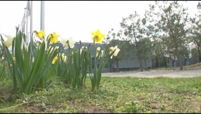 Paasbloemen gemeentehuis Bonheiden kondigen lente aan