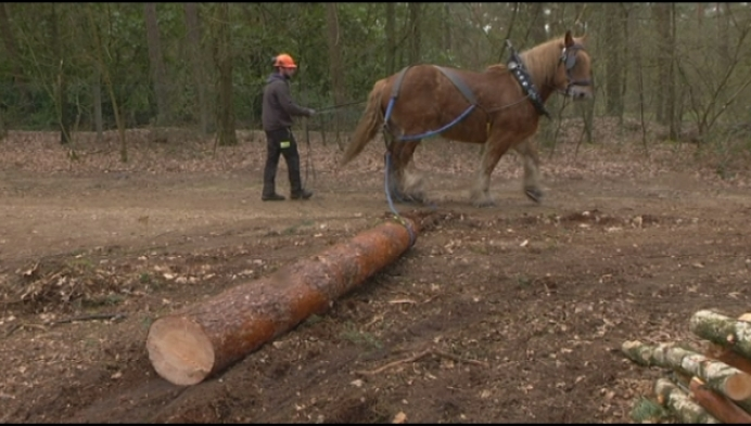 Trekpaard helpt historische grafheuvel blootleggen