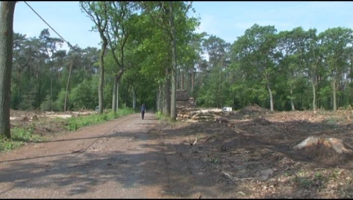 Veel vragen bij kaalkap aan Postelse bossen