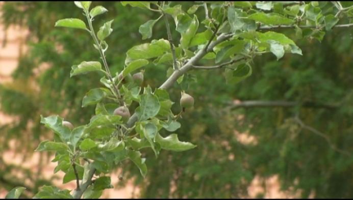Stad Mechelen betaalt mee aan bomen in privé-tuinen