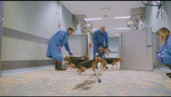 Werknemers Amival verzorgen al 20 jaar proefdieren Janssen