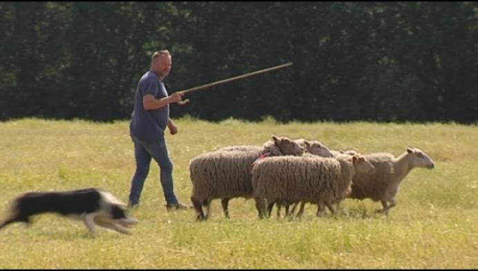 Cool van buiten, stressen van binnen voor een ticket voor WK schapendrijven