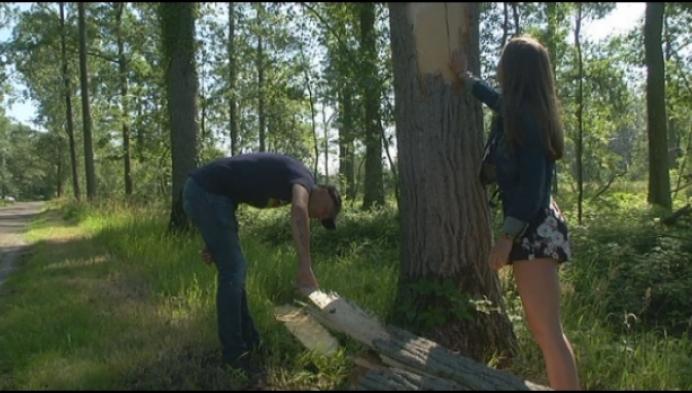 Jong gezin ontsnapt aan omgevallen boom in Herselt