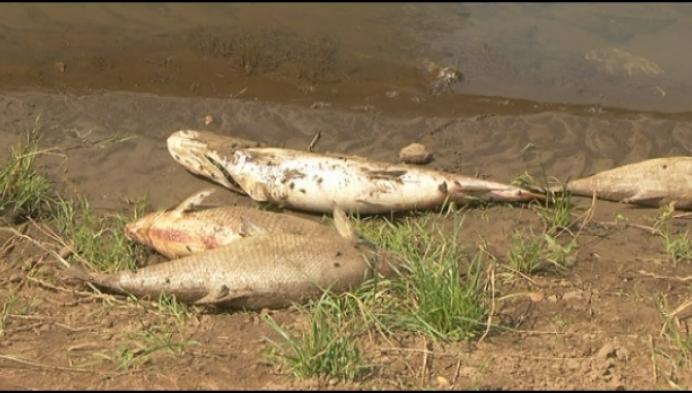 Vissterfte Aa gevolg van overgelopen rioolwater
