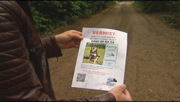 """Koppel zoekt hond Kuma:""""Gestolen of meegenomen?"""""""