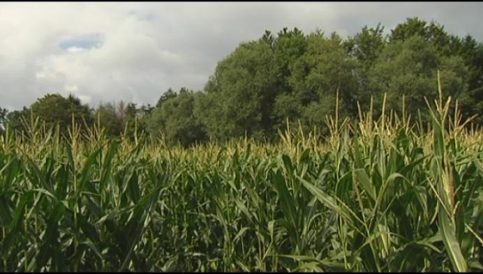 Verdwalen in het maïsdoolhof kan tot oktober