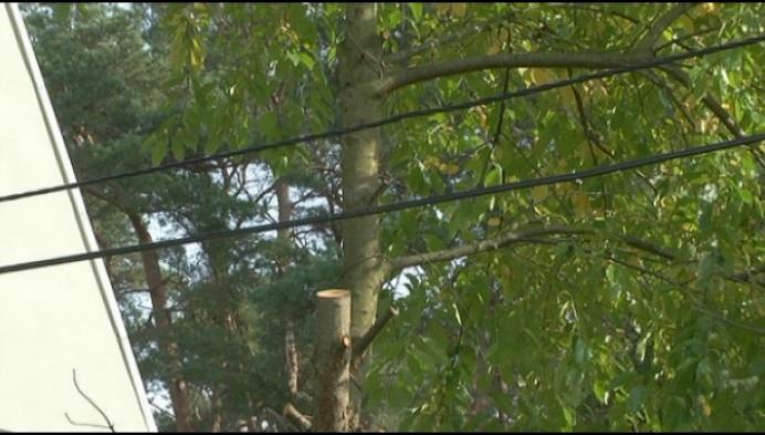 """""""Snoei bomen langs elektriciteitskabels"""""""