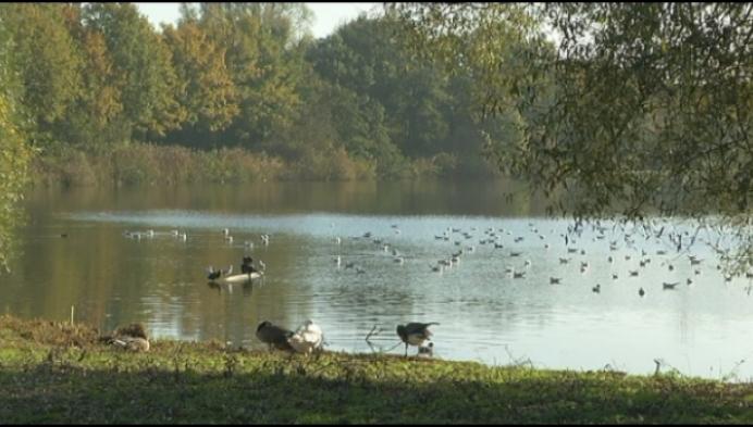 Stropers actief op recreatiedomein Breeven in Bornem?
