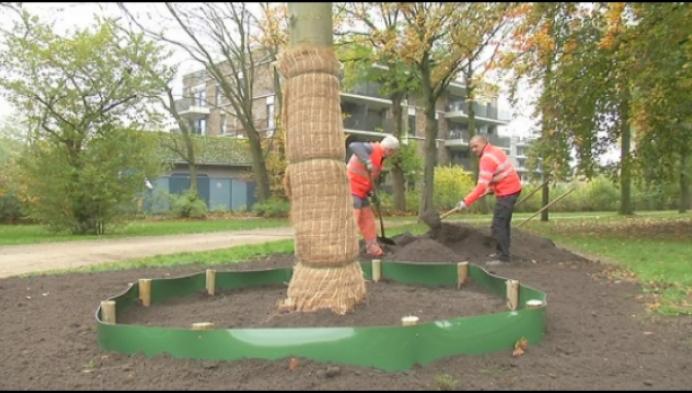 Burgers en stad planten boom van 1800 euro