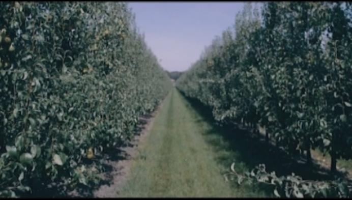 BelOrta wil perenmarkt in China verder veroveren