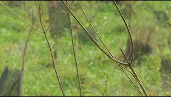 Puurs-Sint-Amands wil 50.000 nieuwe bomen tegen 2024