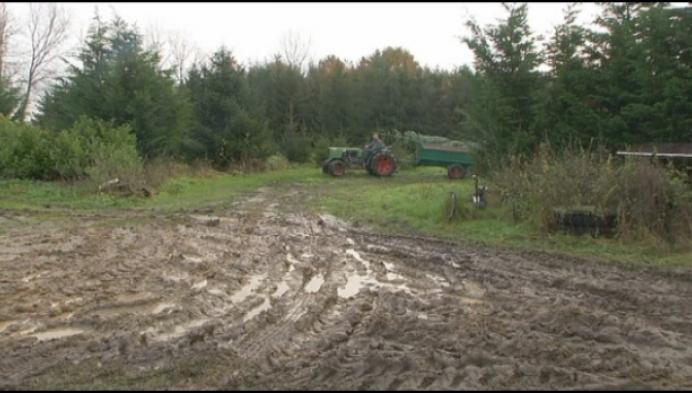 """Duffelse verkopers kerstbomen: """"Exemplaren tot 6 meter hoog"""""""