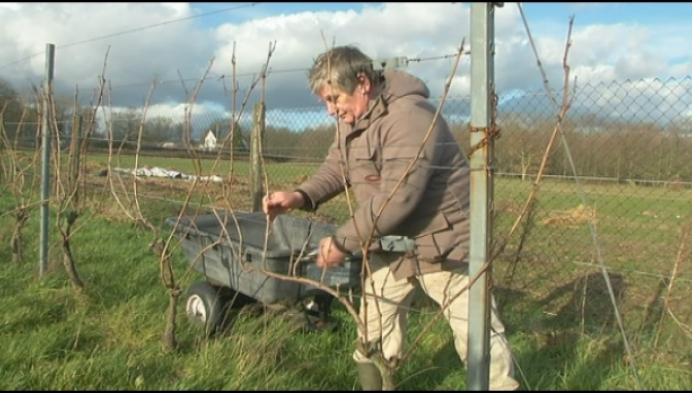 Heistenaar nu al volop aan het werk in zijn wijngaard