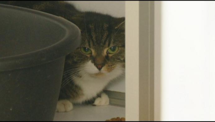 Baasje heeft schrik voor coronabesmetting: asiel Mechelen vangt kat op