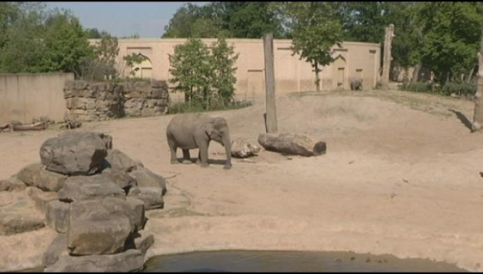"""Planckendael opnieuw open: """"Olifanten enorm gemist"""""""