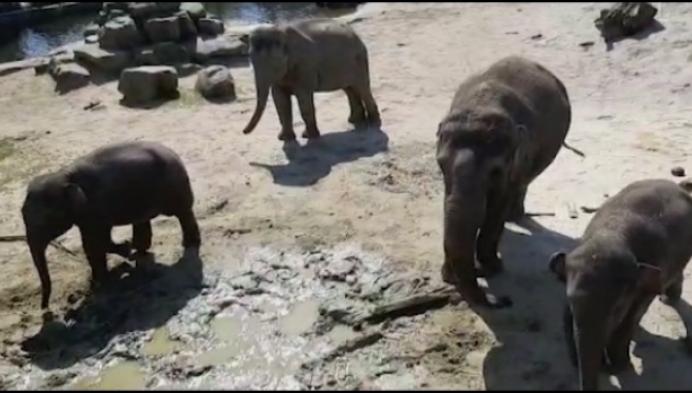 Planckendael treurt om Dumbo