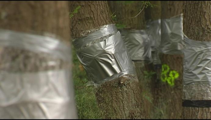 Hoop voor verminkte bomen natuurdomein De Liereman