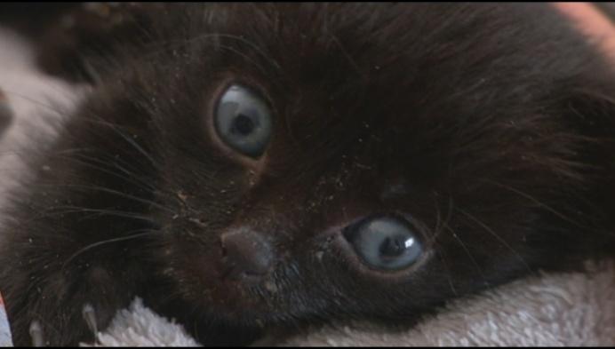 Kitten vol lijm gevonden in vuilzak