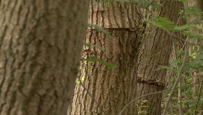 Eén jaar na het vandalisme: zowat 100 bomen halen het voorlopig