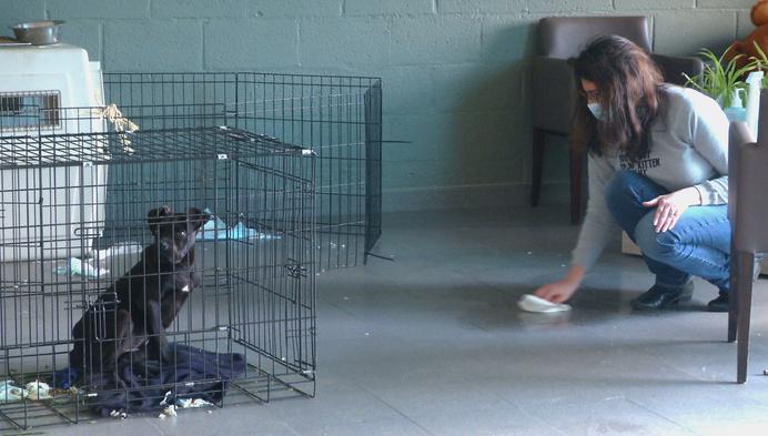 Dierenbescherming neemt 68 honden mee bij fokker