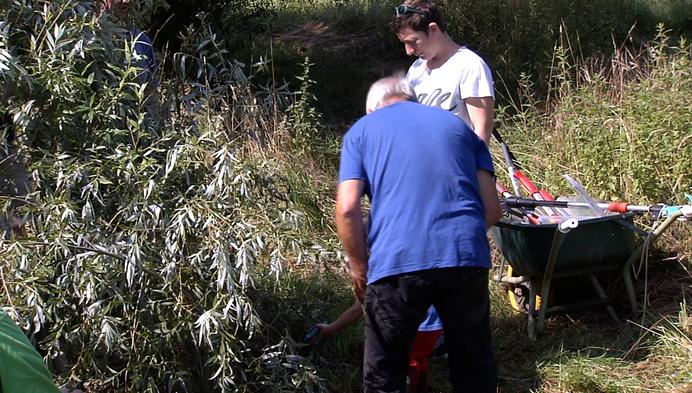 Wilgententen in natuurgebied Rothoek zijn hersteld